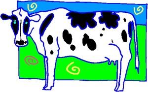 Cow 20